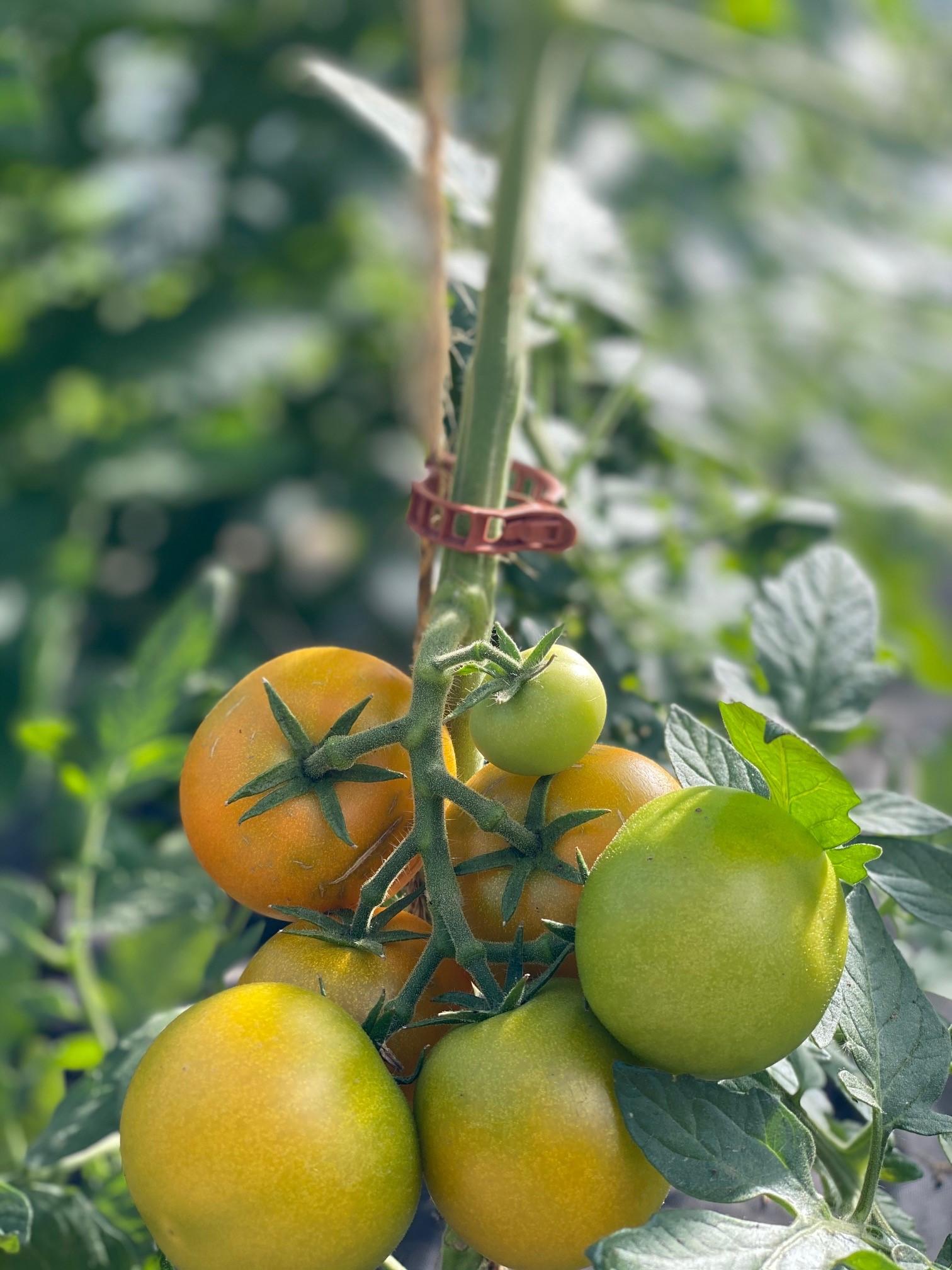 Fleisch Tomaten Mix 500g